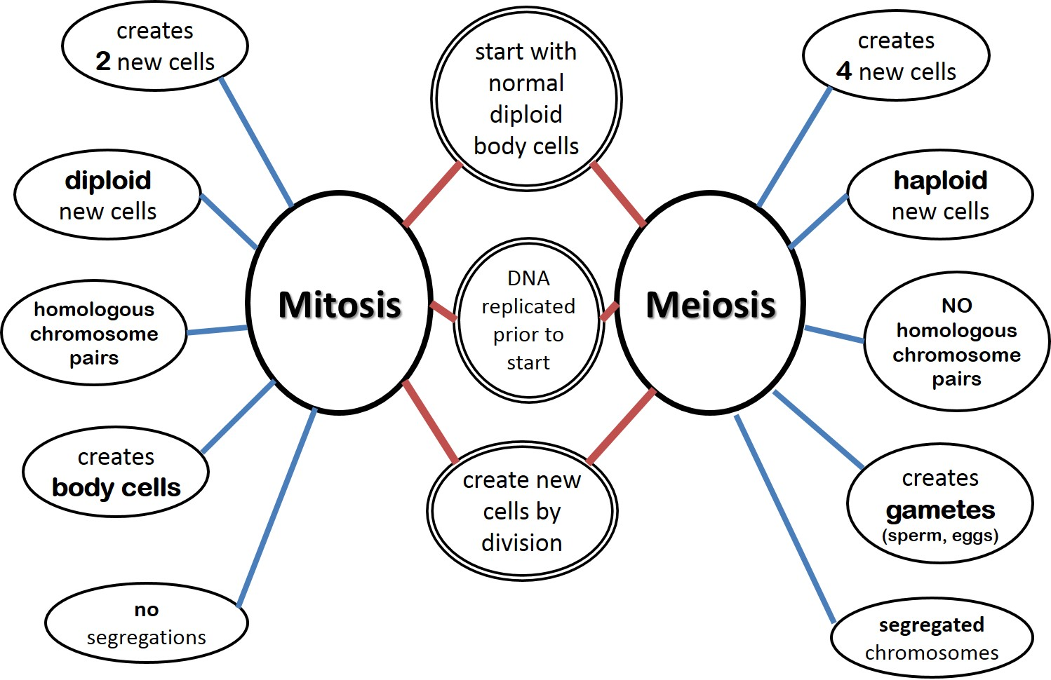 escience lab 11 mitosis Essays - largest database of quality sample essays and research papers on escience lab 11 mitosis.